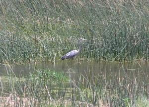 19-Lovely_Rio_I-40_Wetlands