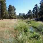 Arizona Trail area, after