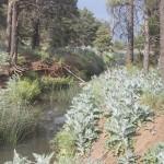 Arizona Trail area, before